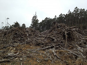 Forestry clearing on Boney Road